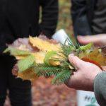 Bäume und der Klimawandel